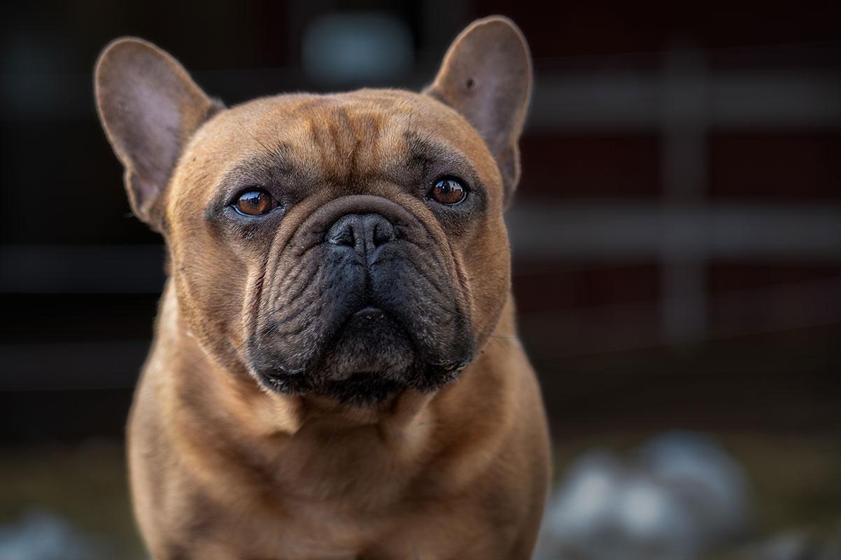 Porträtt av ensam hund.